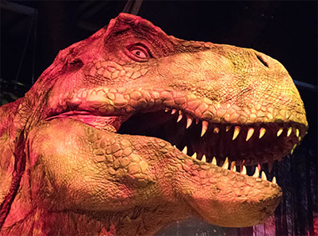 "An animatronic Tyrannosaurus rex (T. rex) is part of ""Jurassic World: The Exhibition"" at the Field Museum in Chicago, Illinois. The interactive exhibit is based on the real-world science of dinosaur DNA."