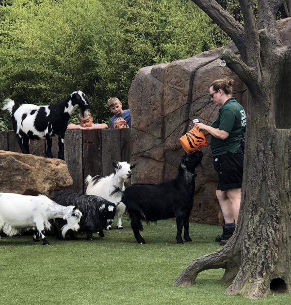 A New Addition at London Zoo | Kid Reporters' Notebook | Scholastic Inc.