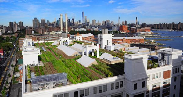 The rooftop farm that Brooklyn Grange maintains at the Brooklyn Navy Yard in New York