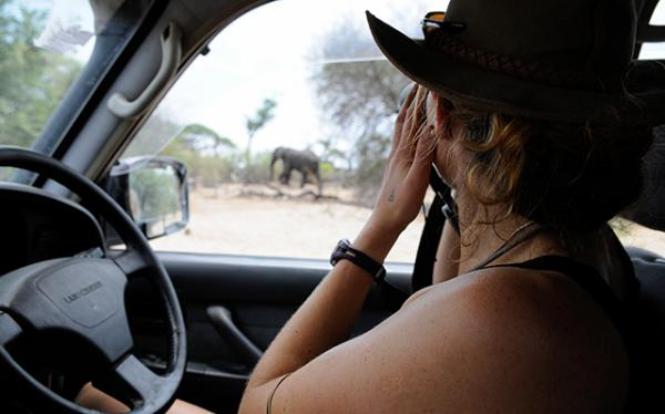 Kate Evans works in the field to conserve elephants.