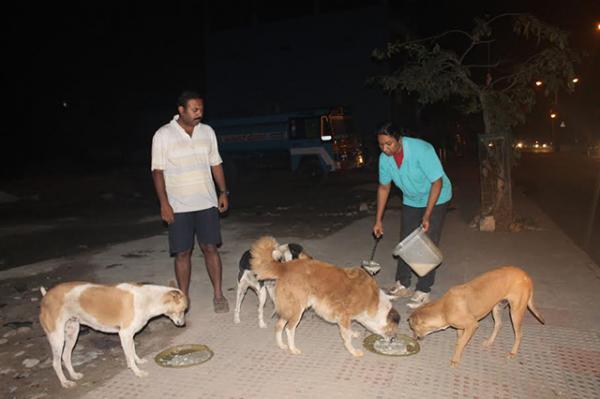 Anil Prasad and Bismi Anil feeding stray dogs