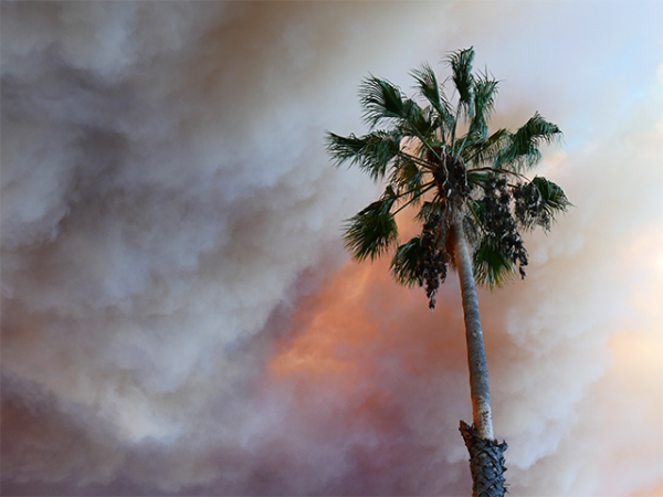 Palm tree and smoke (Photo by Carl Huffman)