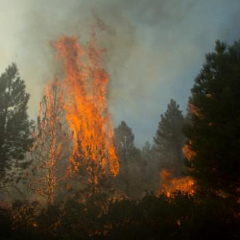 A pine tree torches during the Milli Fire in Deschutes National Forest near Sisters, OR, August 23, 2017.