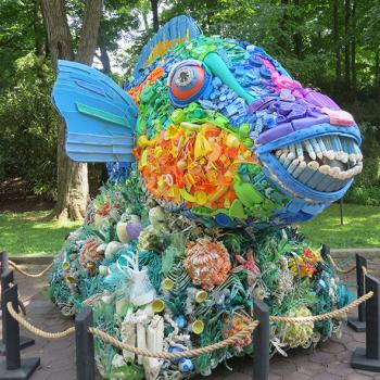 Priscilla the Parrot Fish. Coral reefs in which parrot fish live are in danger because of ocean pollution.